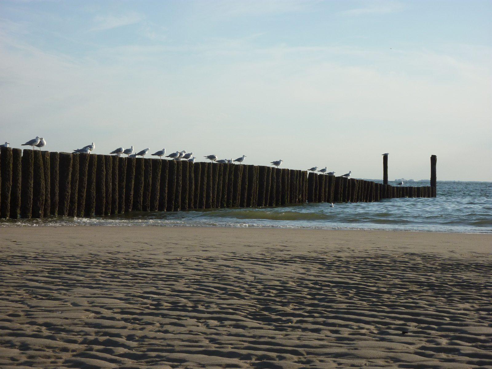 Strand Pfahlköpfe