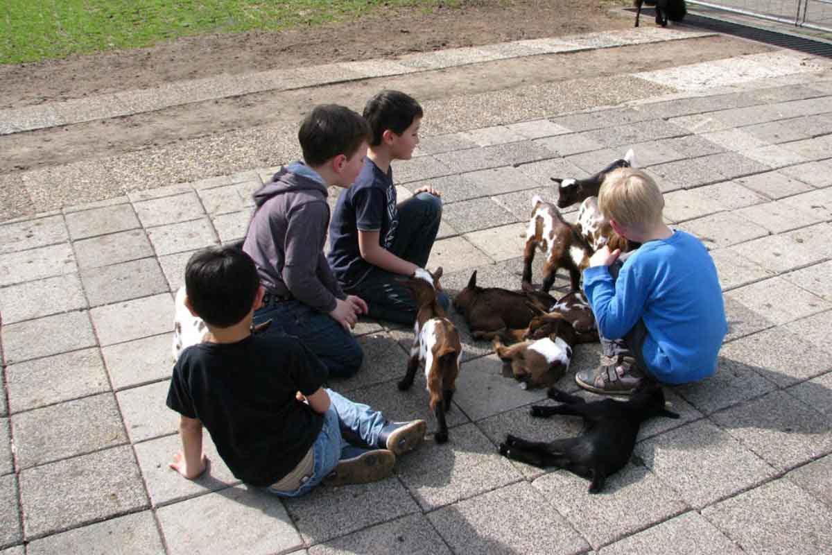 Dondertman Petting Zoo
