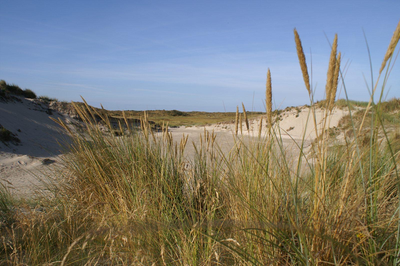 Top 5 vakantie activiteiten: Wat te doen op Texel
