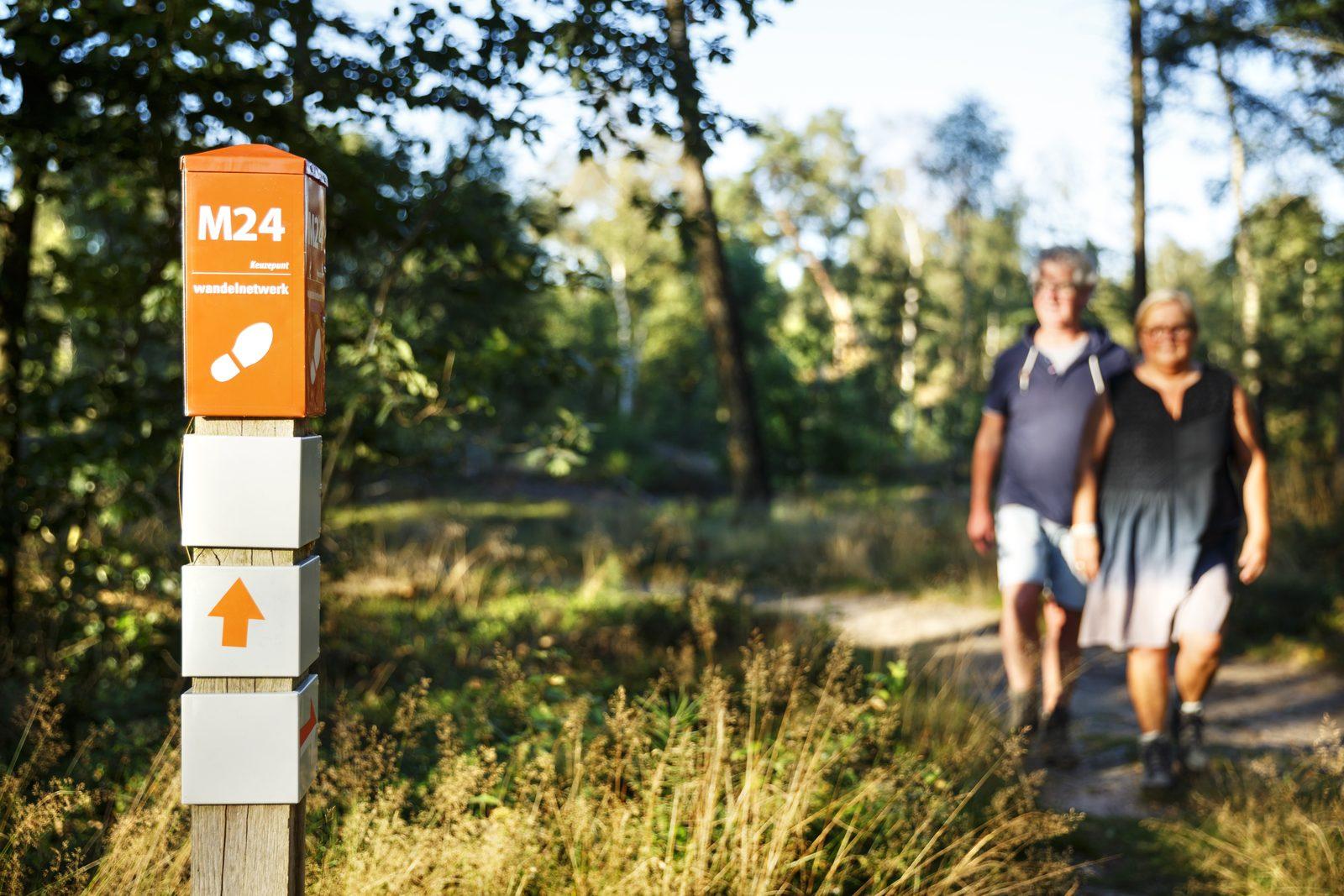 Hiking in Holten Holterberg Salland Ridge