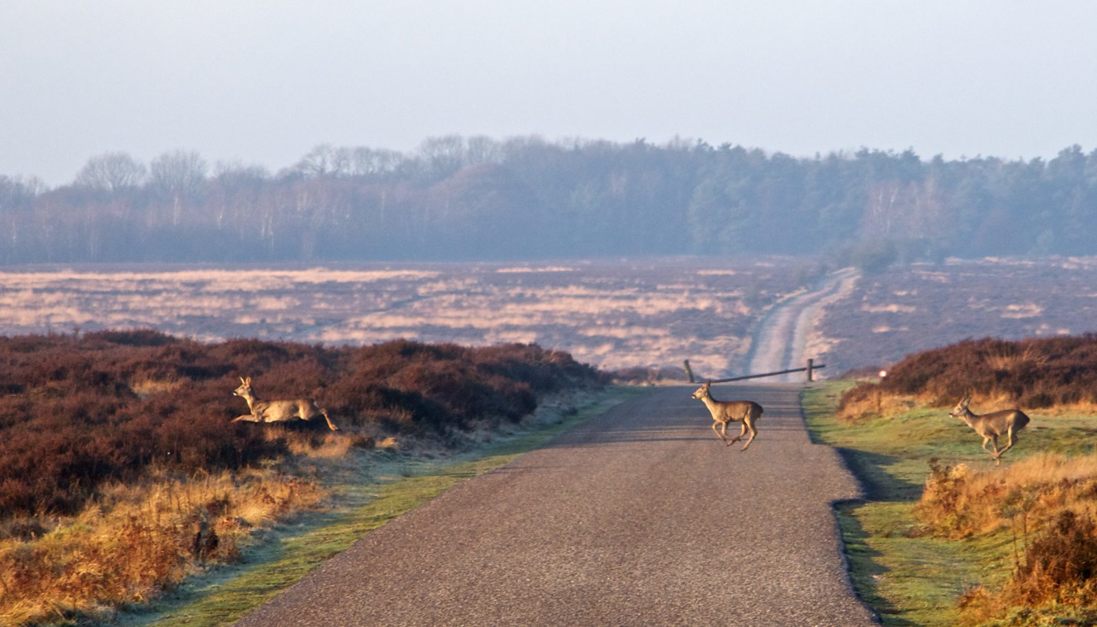 Rent a cottage in the Veluwe for Pentecost