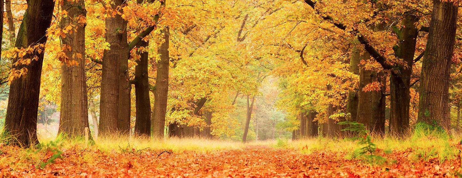 Autumn break at the Veluwe