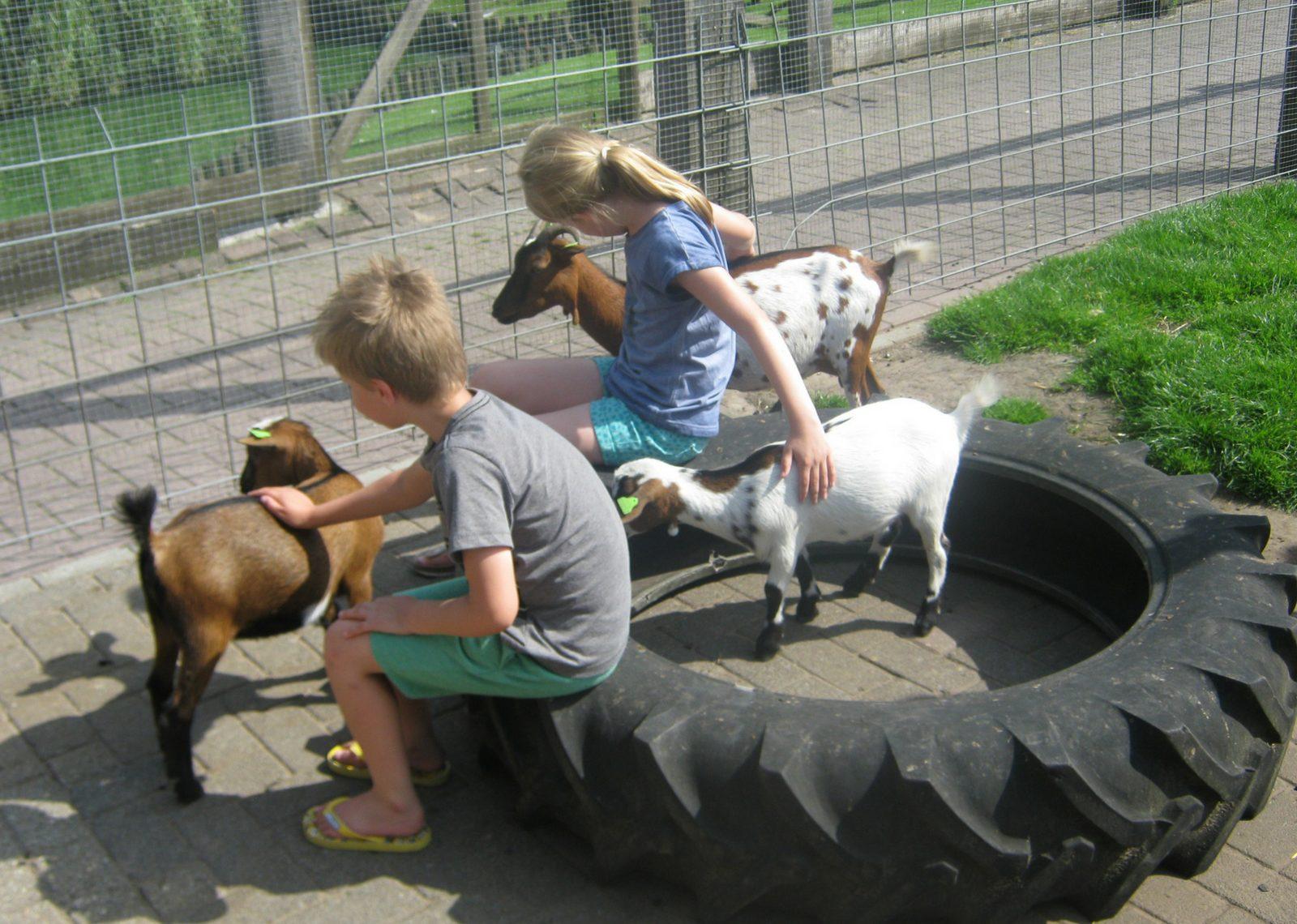Knuffelen met de boerderijdieren bij De Flierefluiter