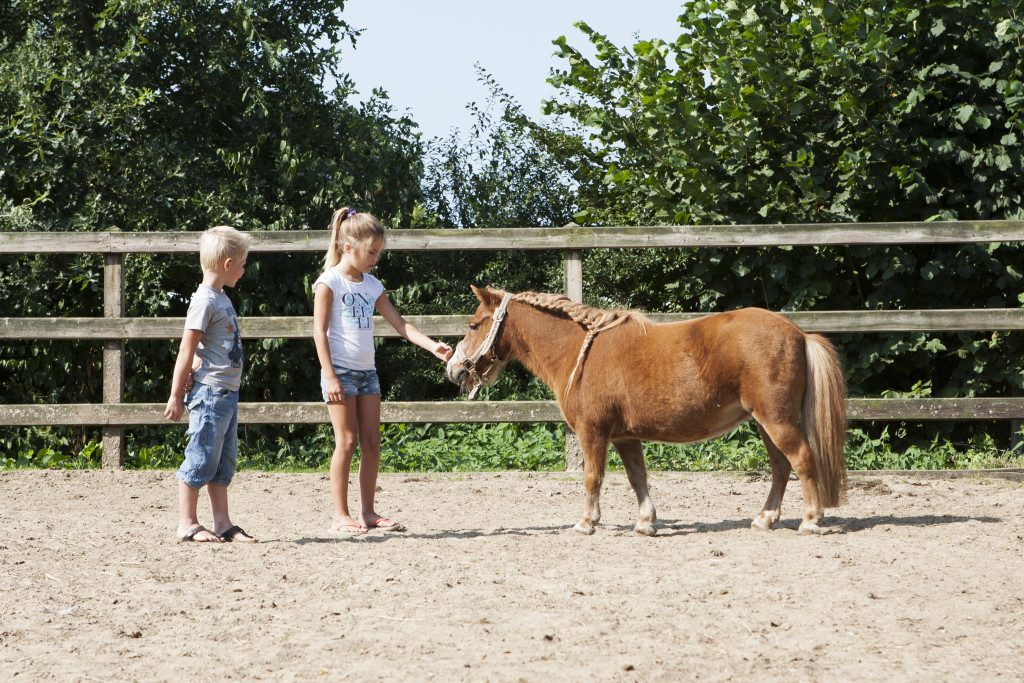 Pony Club at De Boshoek Recreational Park