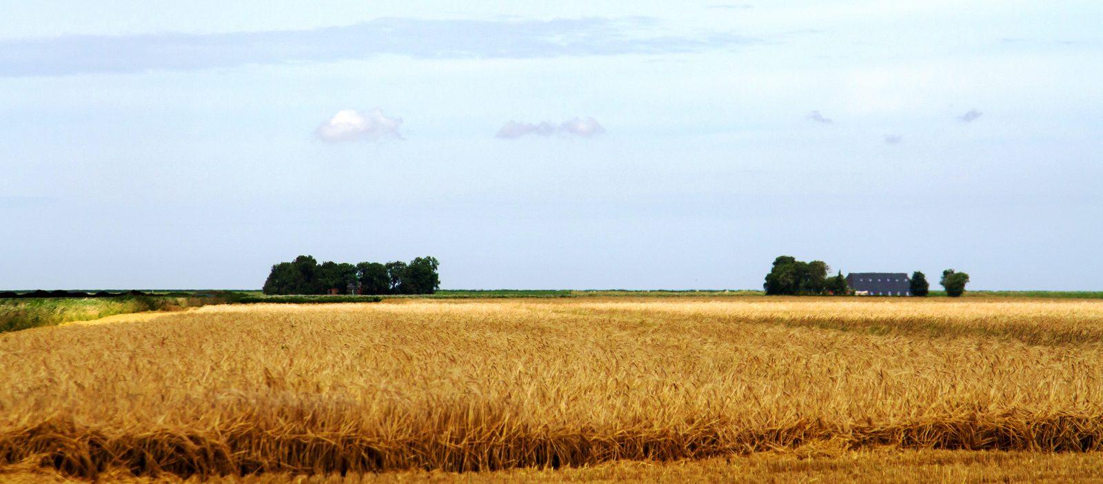 landschap in Groningen met graanvelden en vergezichten