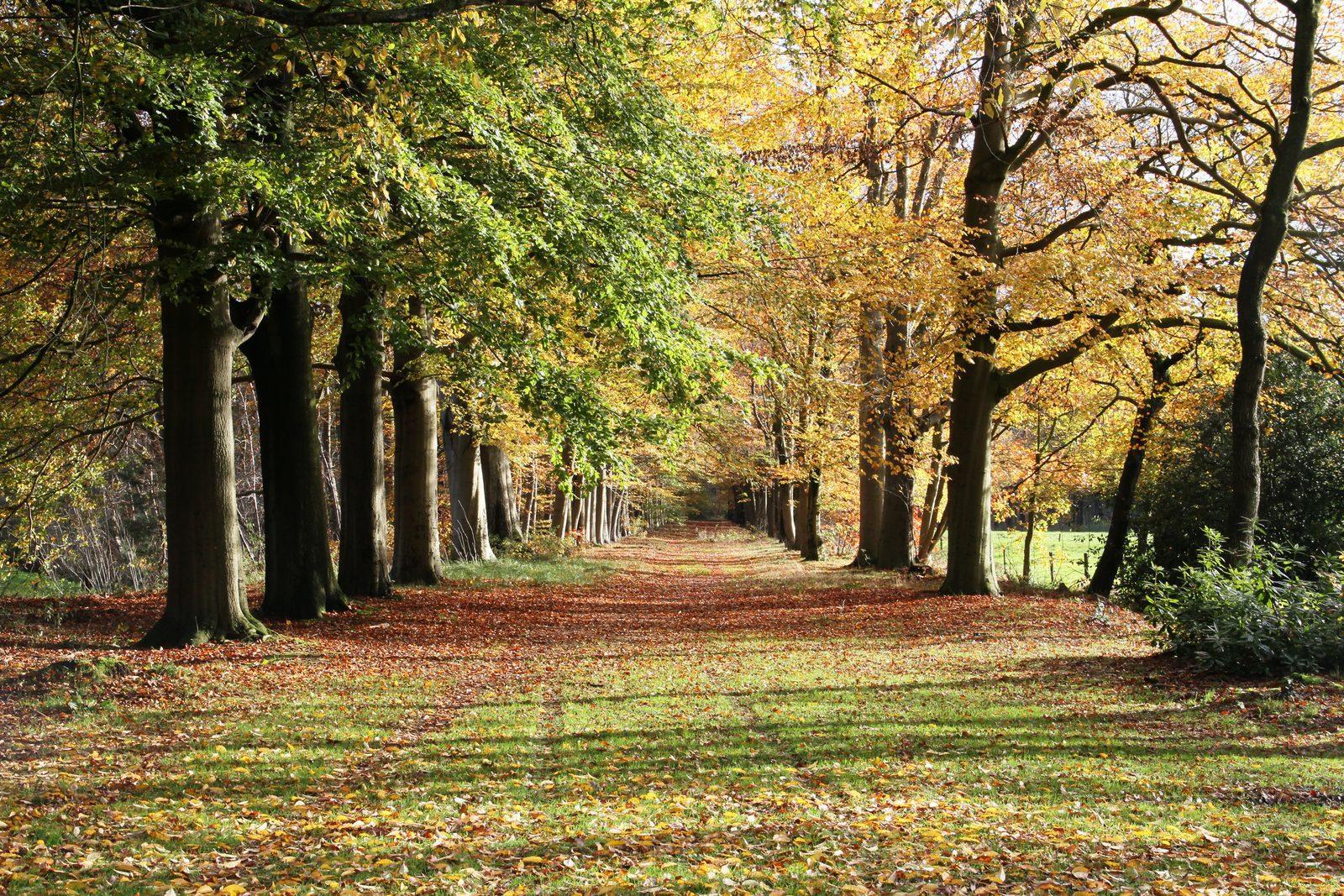 Vakantie in de Brabantse natuur