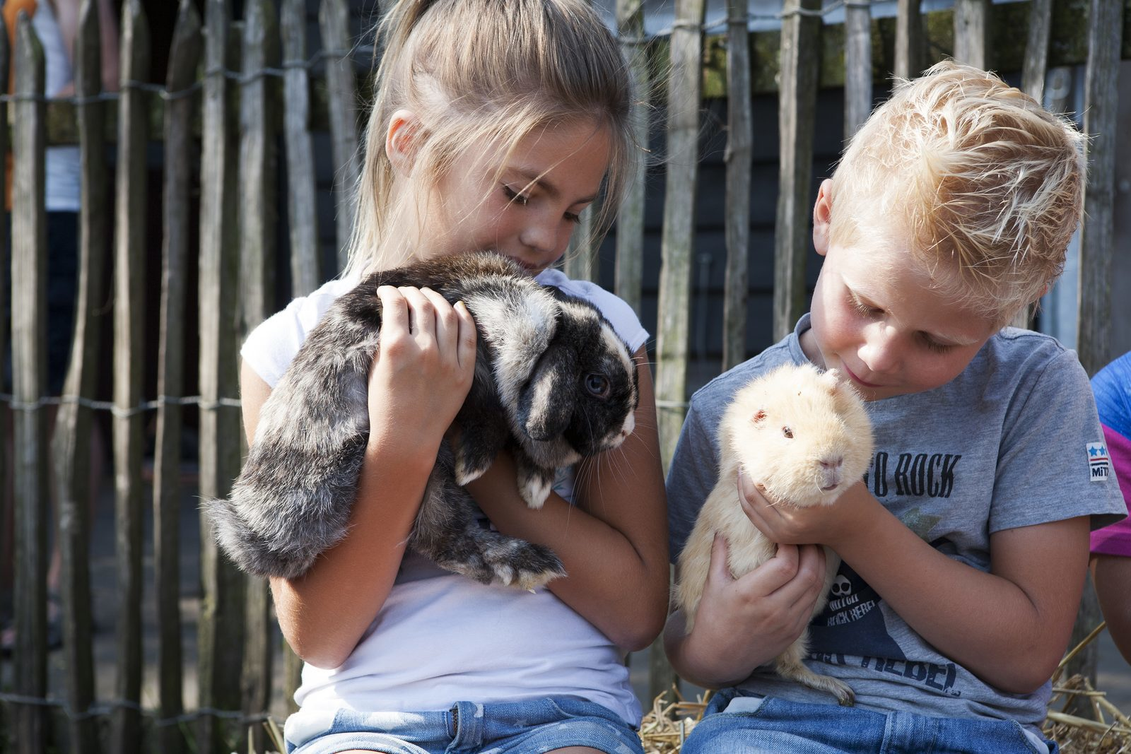 Visit the petting zoo during a vacation at the Veluwe | Recreation Park De Boshoek