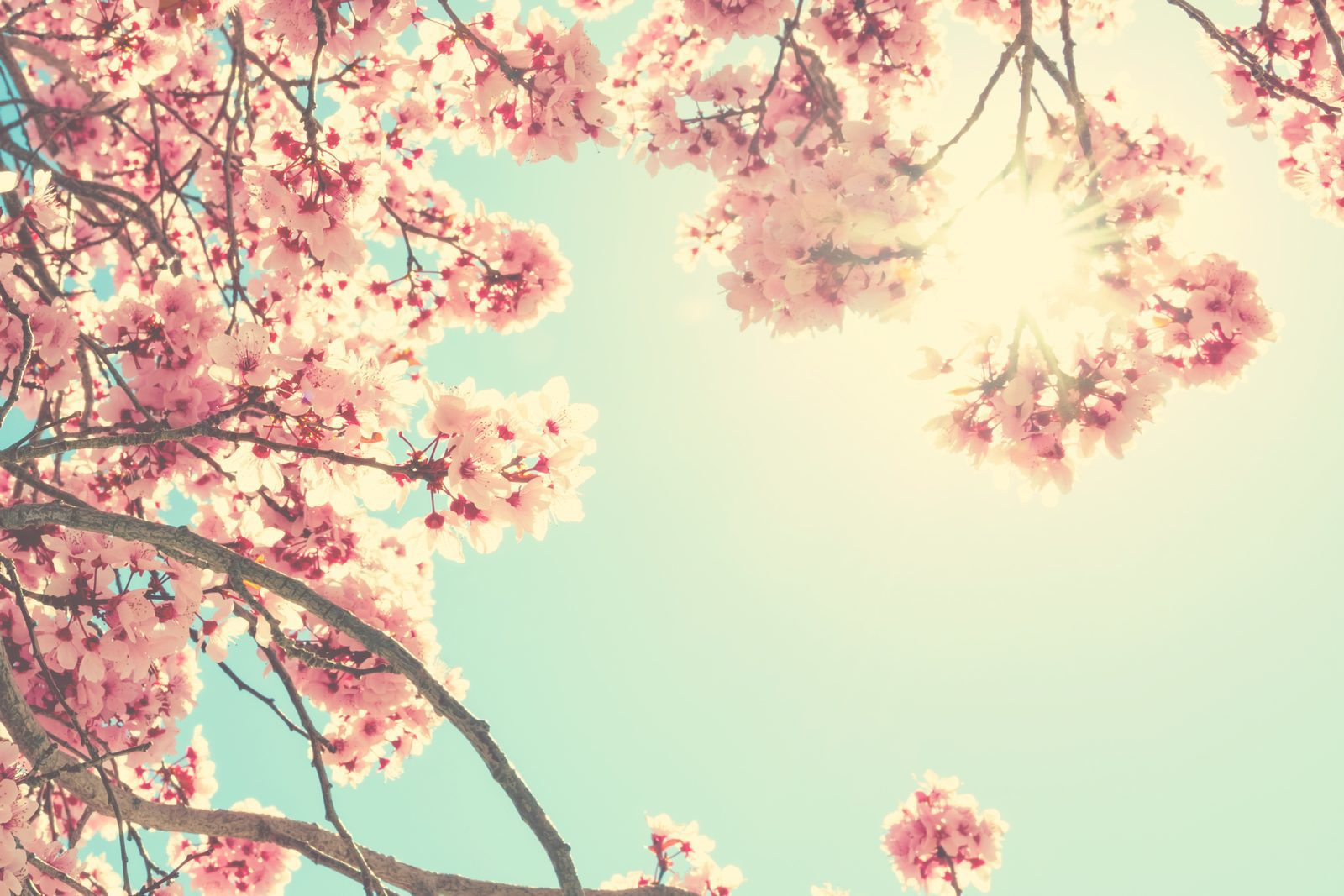 Enjoy spring in Limburg!