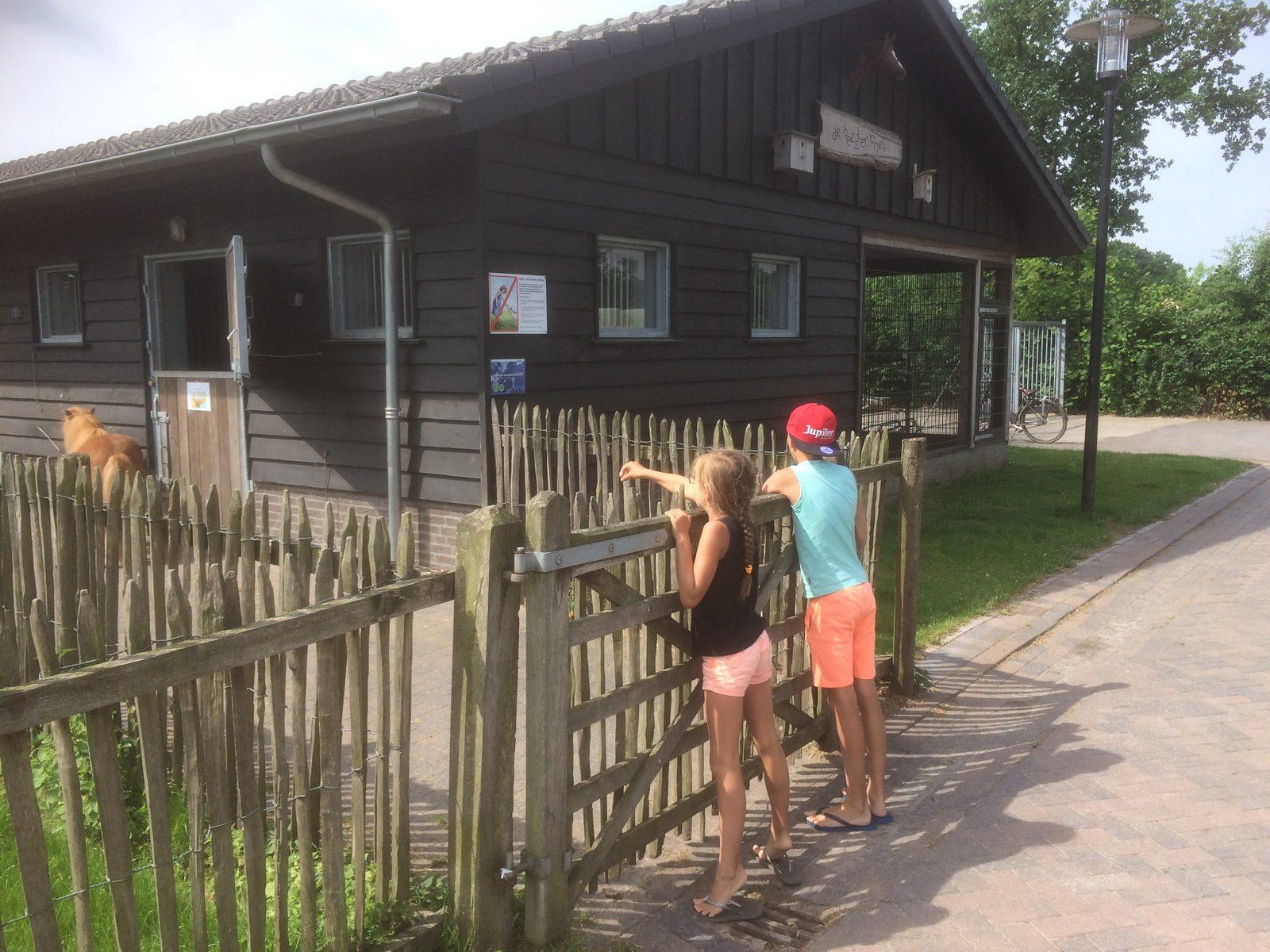 Lekker spelen en ponyrijden op  vakantie op Recreatiepark De Boshoek