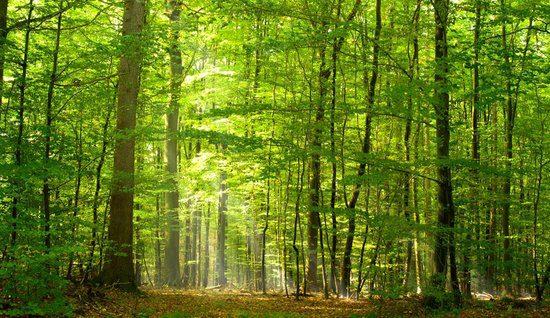 Het Engelandsche Bos