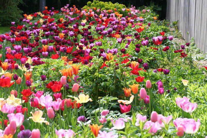 Mien Ruys Gardens