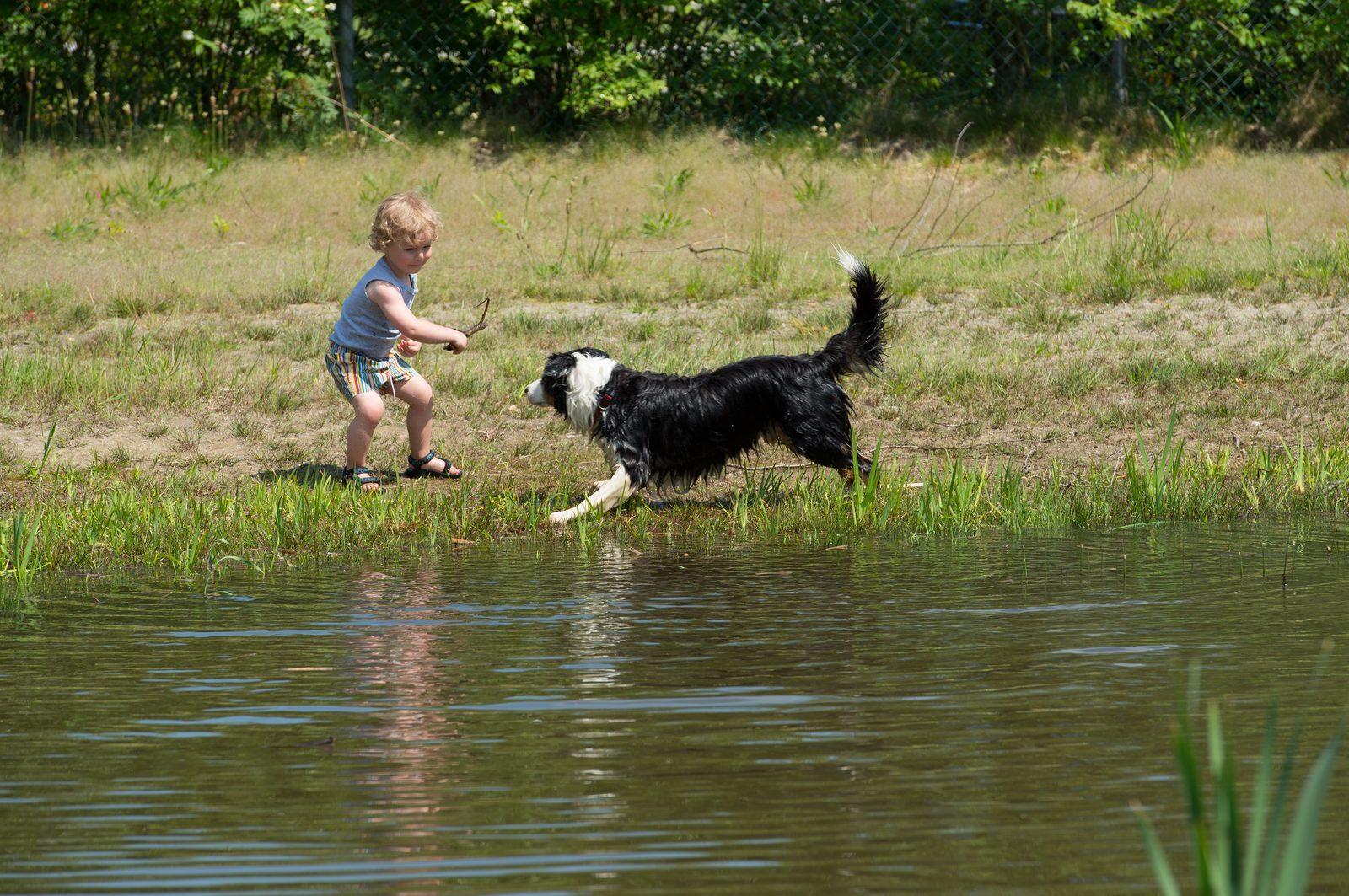 Camping met hond