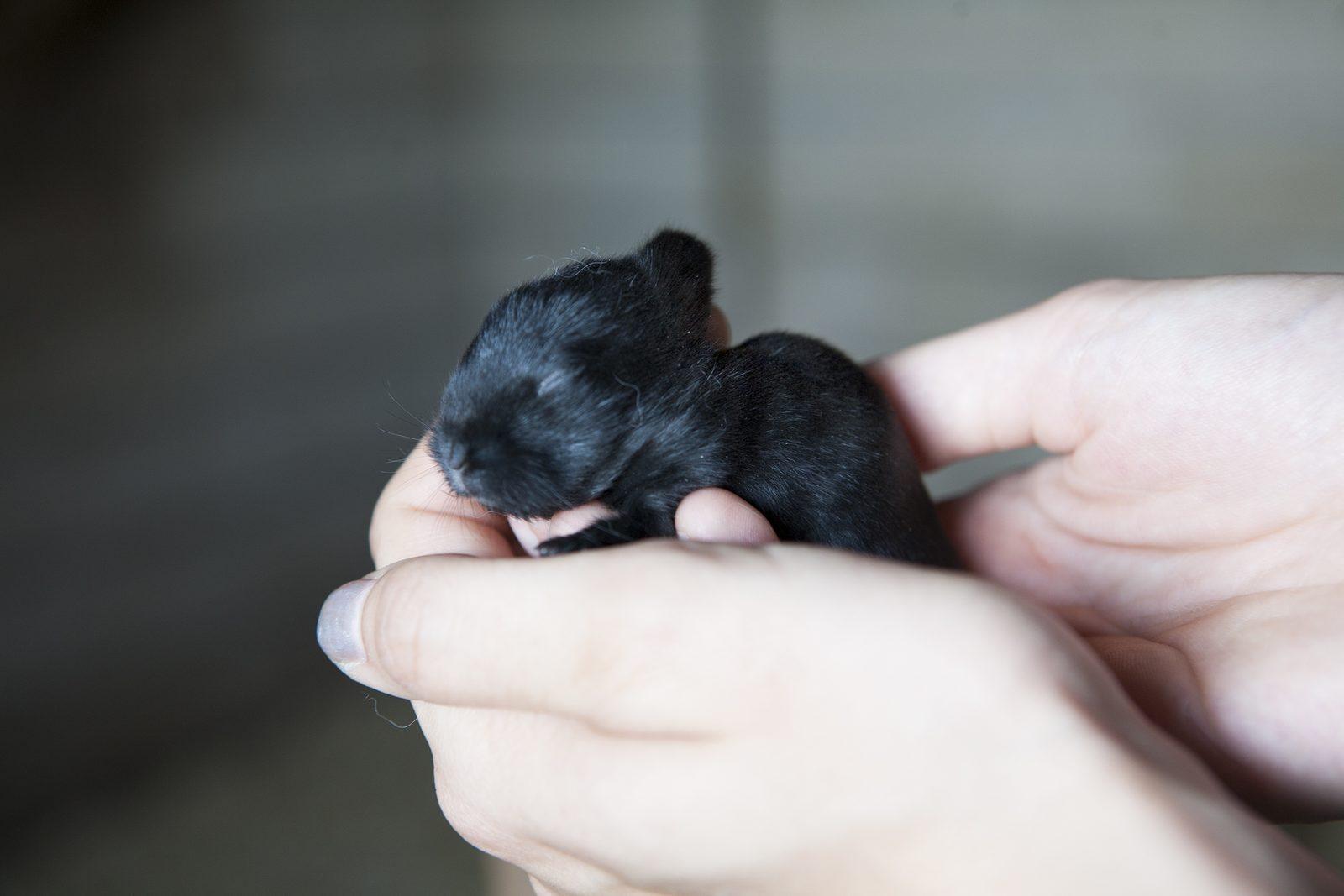 Babykonijntjes geboren bij Recreatiepark De Boshoek!