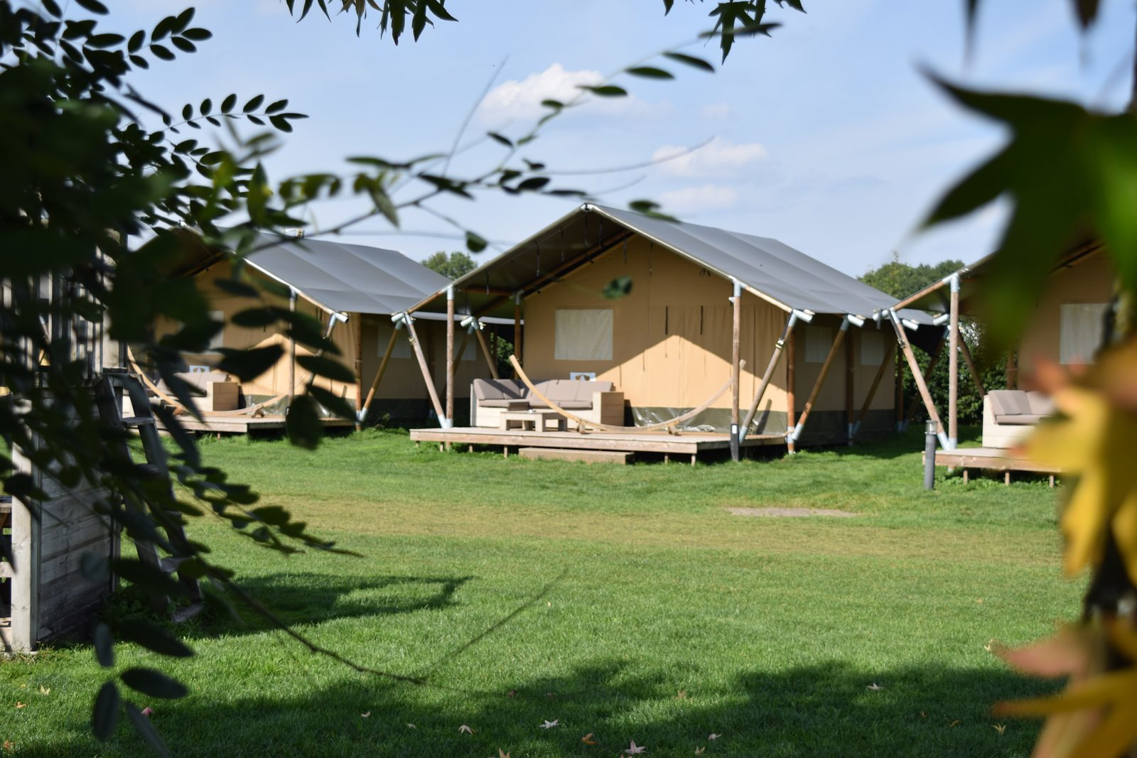 Op safari op de Veluwe bij Recreatiepark De Boshoek