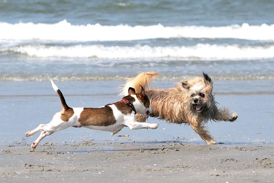 Ferienhaus in Zeeland mit Hund