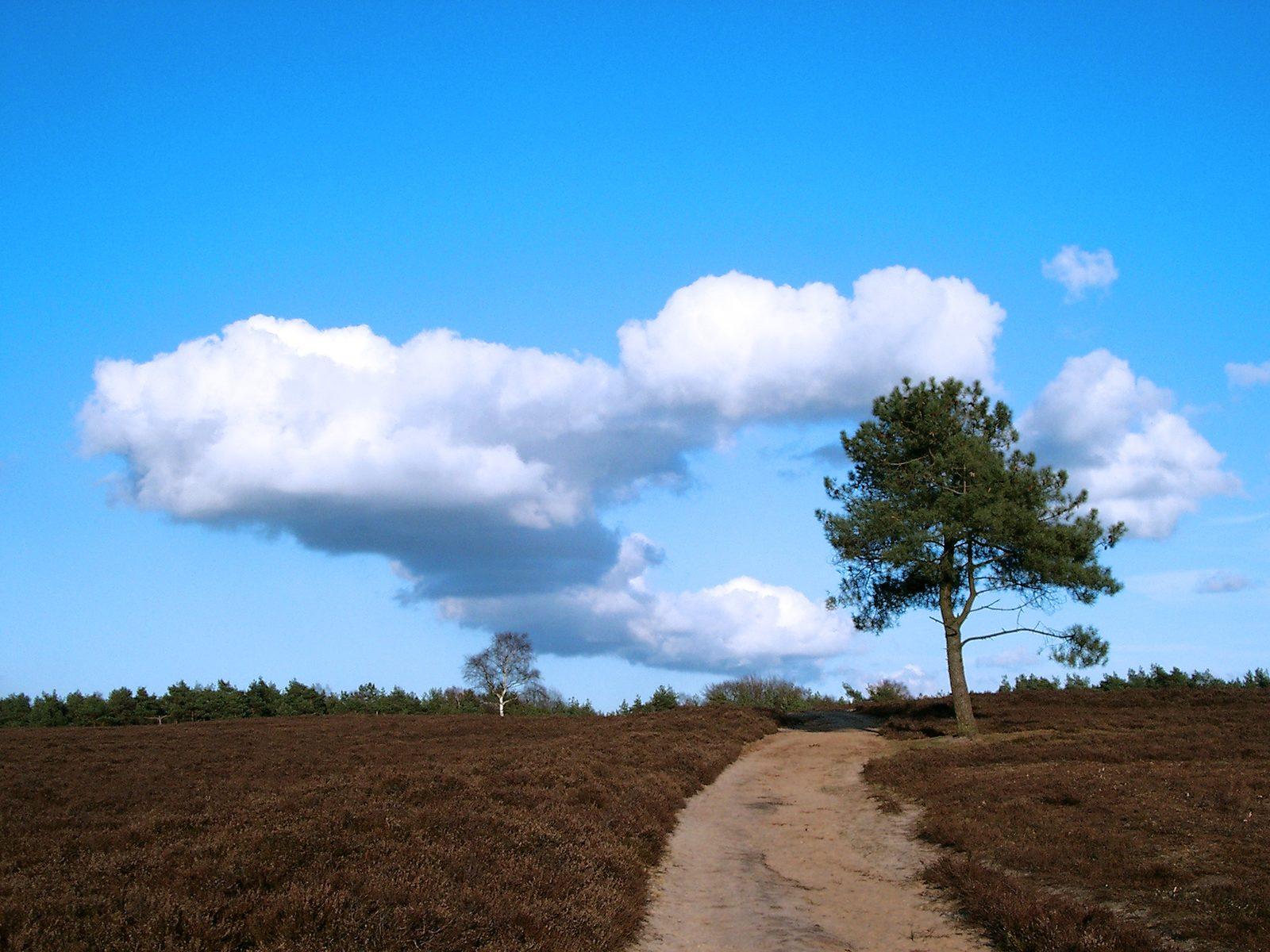 Die Geschichte über den Norden der Veluwe