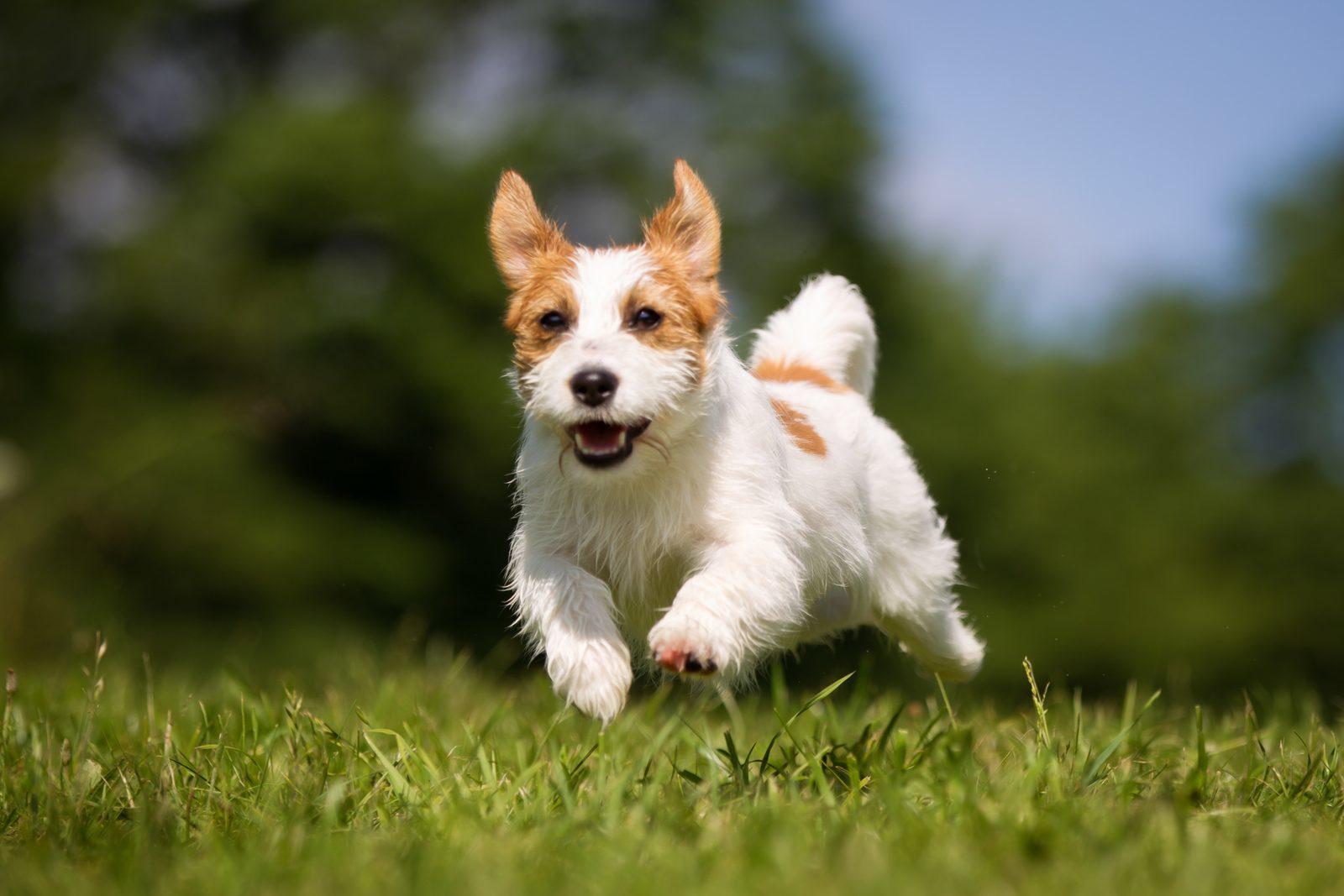 Monat des Hundes