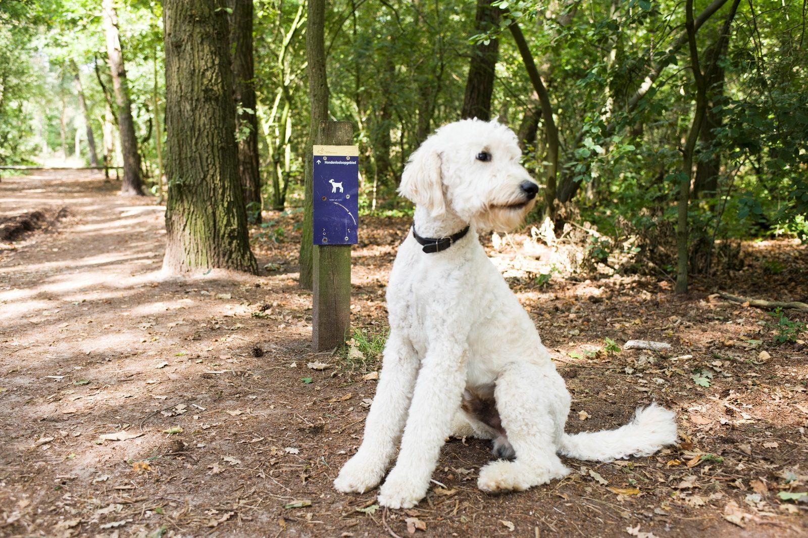 Haustiere auf den Stellplätzen erlaubt