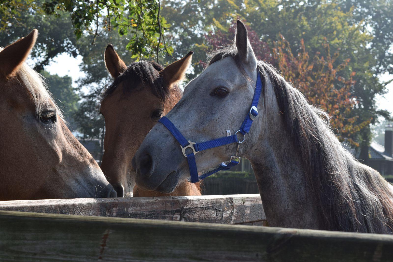 Ponyrijden op vakantie op de Veluwe