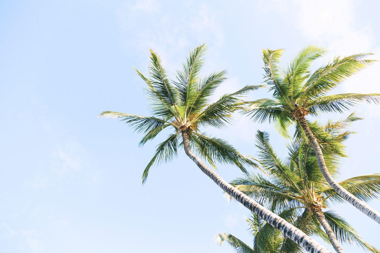 Viaje en Bonaire