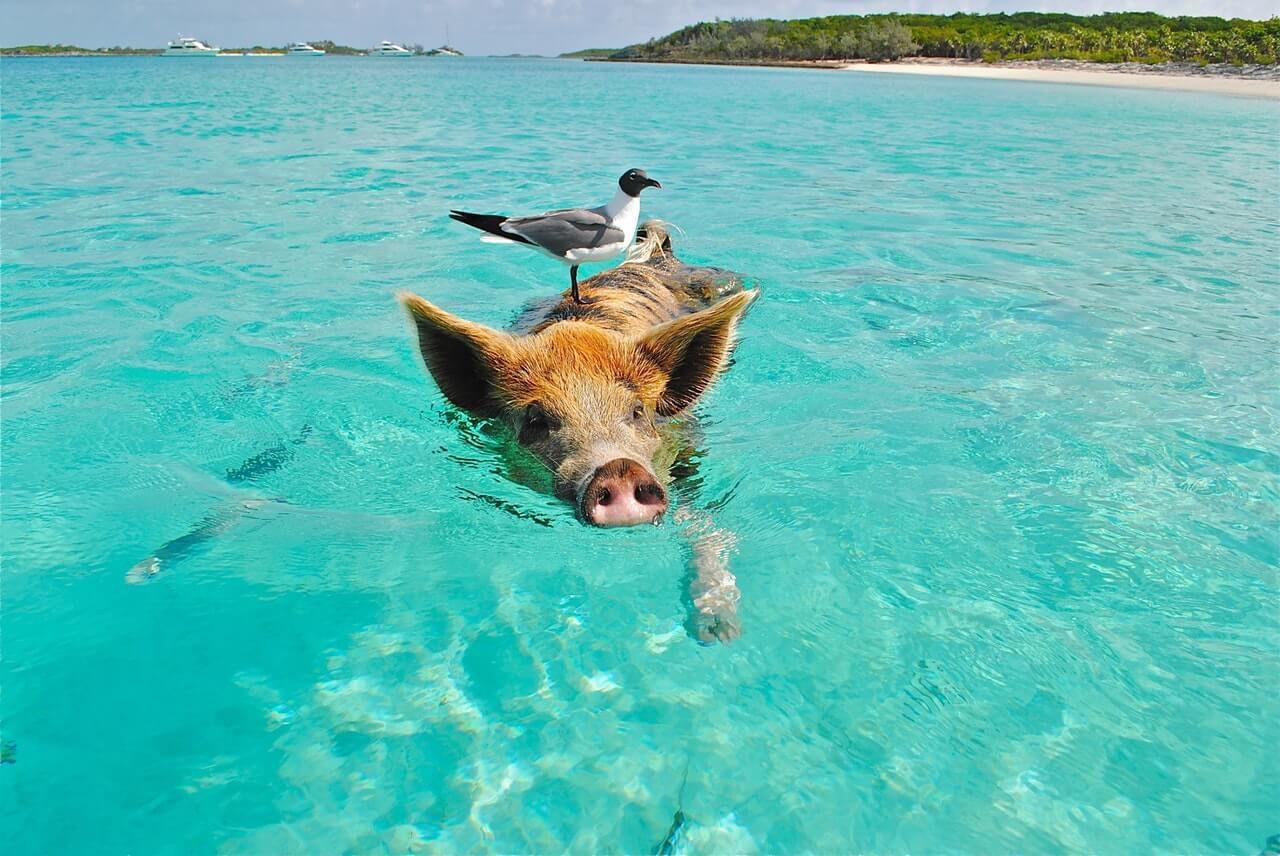 Los animales de Bonaire no son solo acuáticos o terrestres. Definitivamente encontrarás estas hermosas criaturas en esta isla.