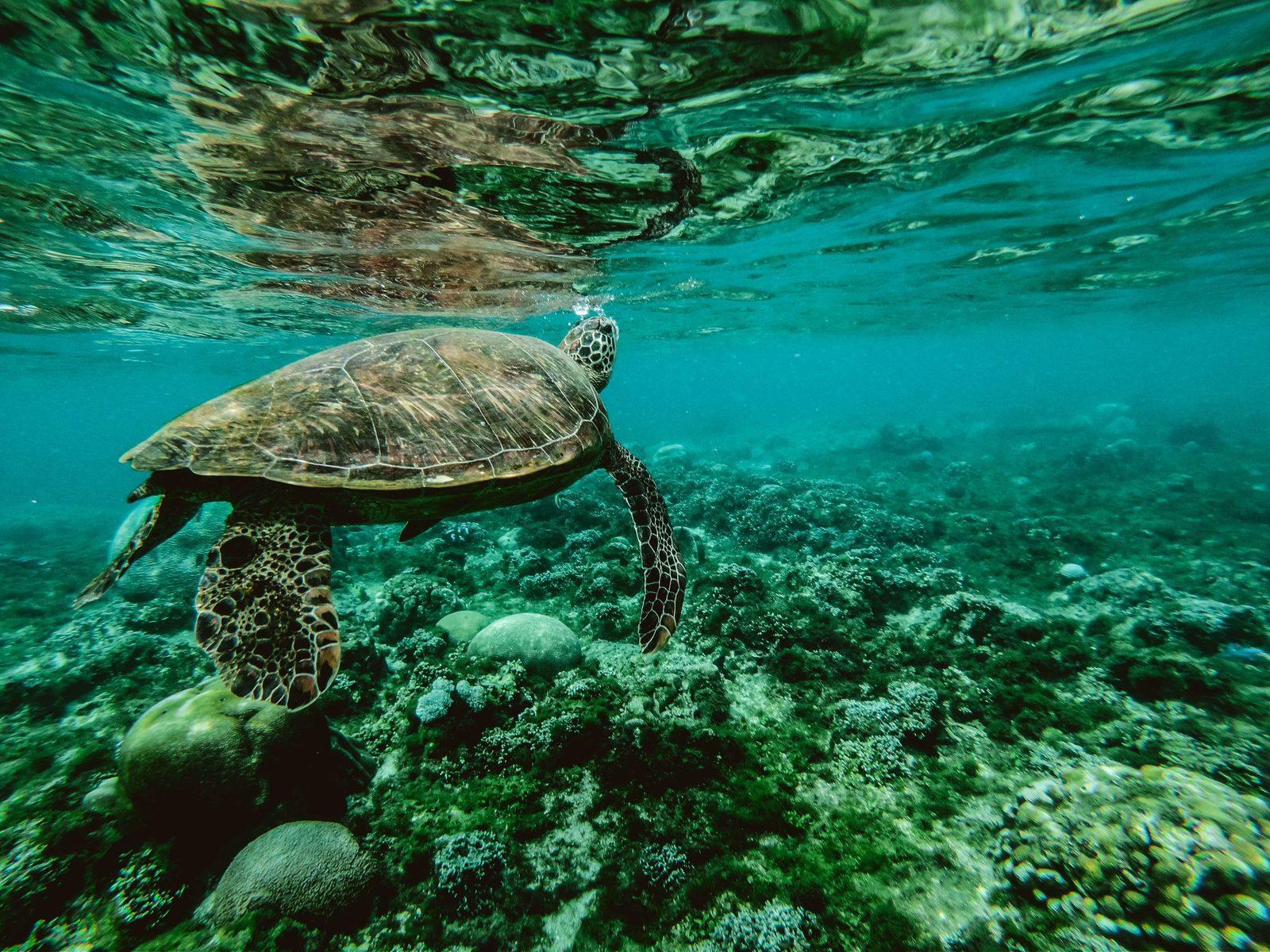 Animales de Bonaire