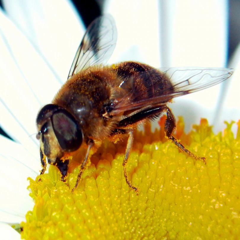 De Bijenstal in Opperdoes