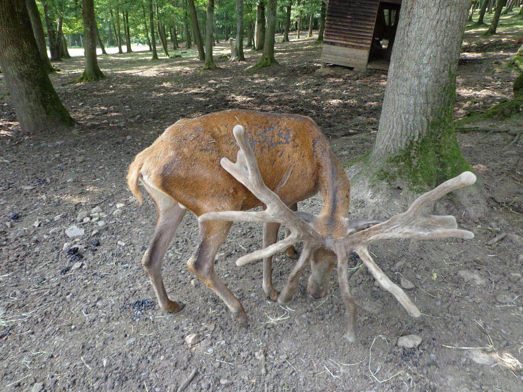 Le parc à gibier de La Roche-en-Ardenne