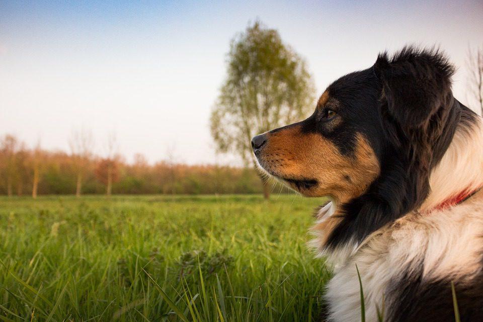 Bungalow mit Hund