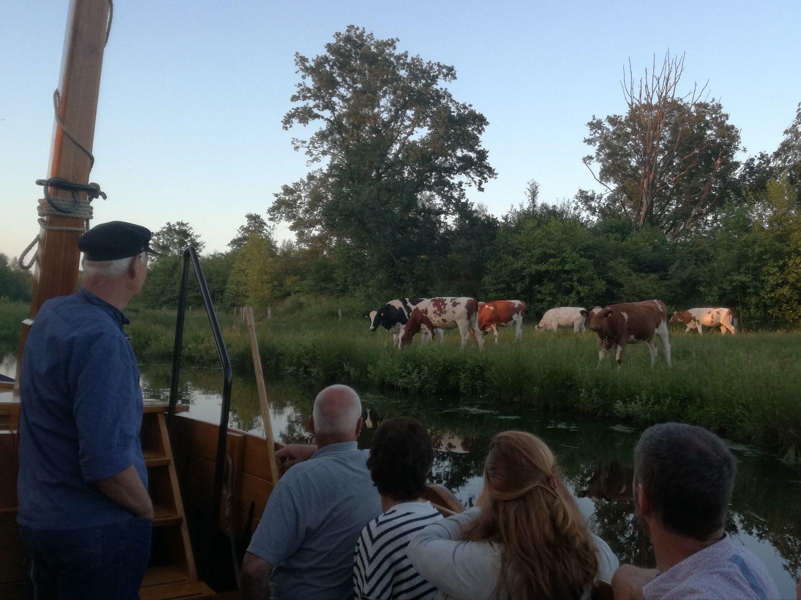 Koeien op de kant