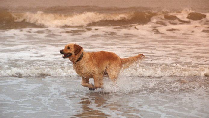 De hond gaat gewoon mee!