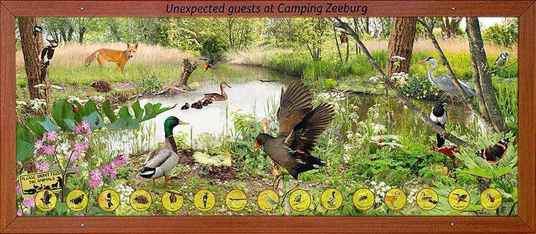 Wildlife Camping Zeeburg