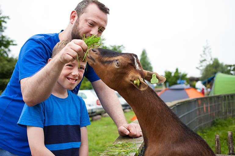 Small happiness, big adventures at our petting zoo and playground