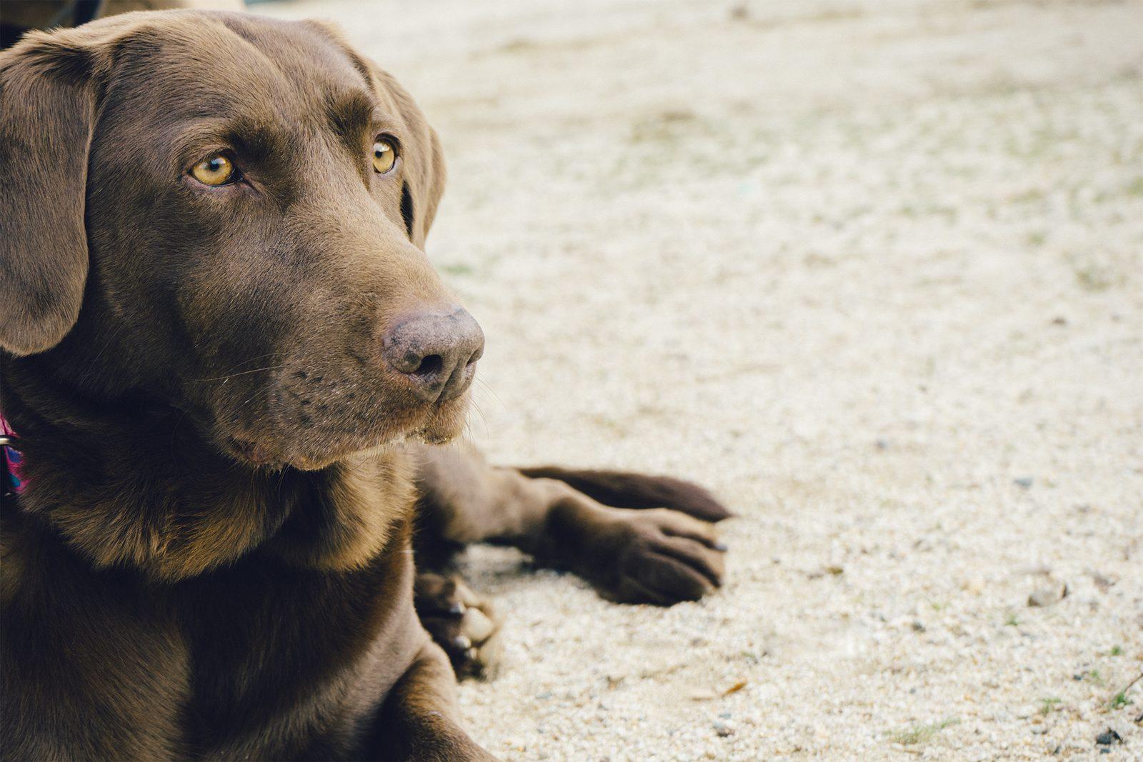 Kamperen in Overijssel met hond