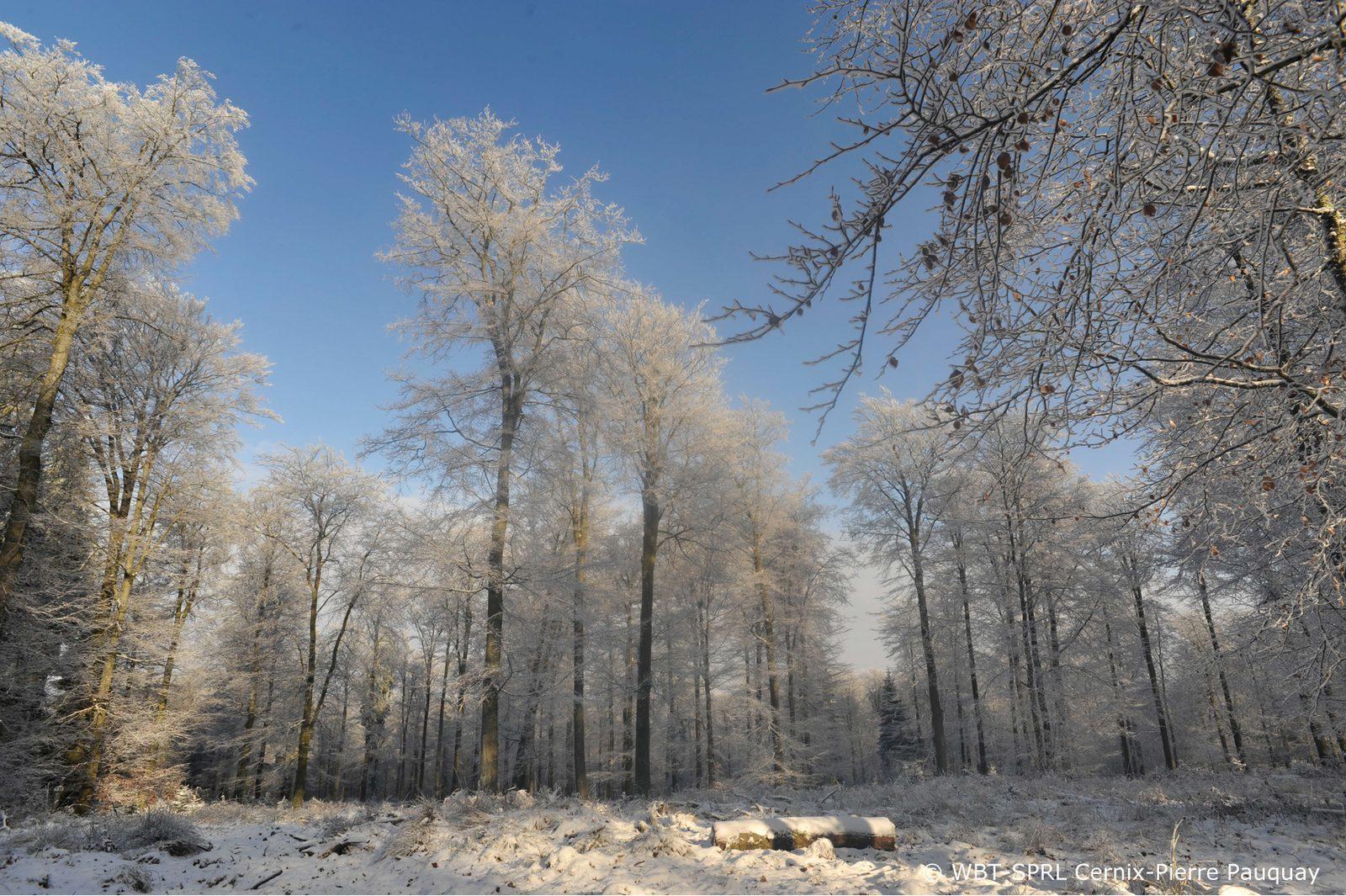 Langlaufen en skien tijdens de vakantie in de Belgische Ardennen