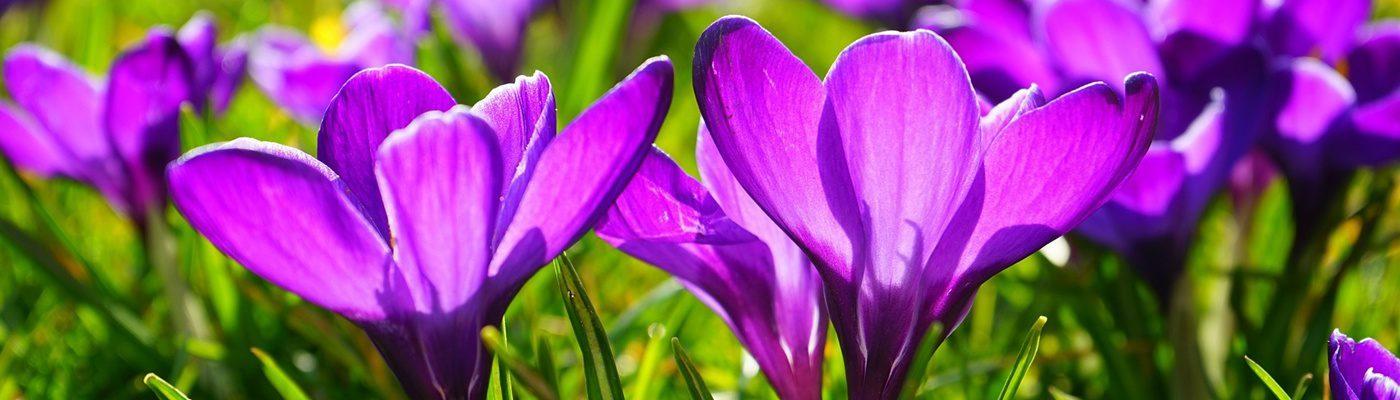 Frühjahrsferien (Spring break)