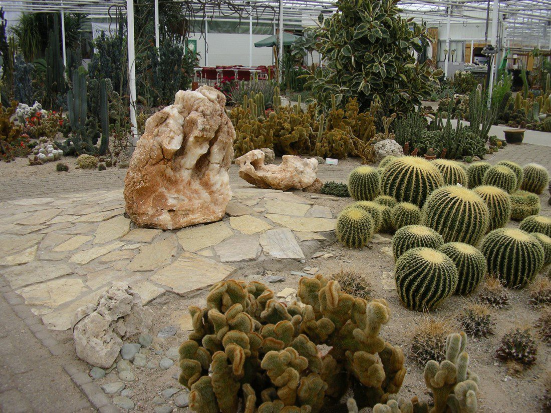 Familiepark CactusOase in Ruurlo