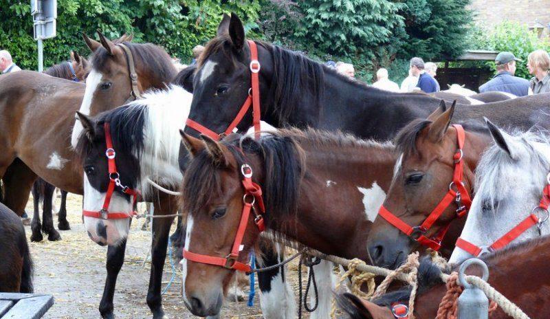 Horse market