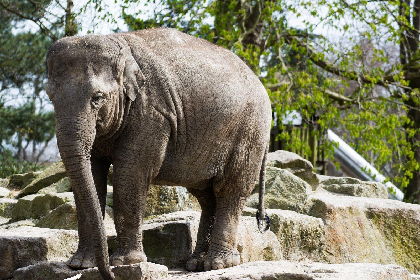 Wildlands Adventure Zoo Emmen - Witterzomer Drenthe