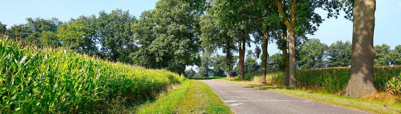 Wandelvakantie Nederland