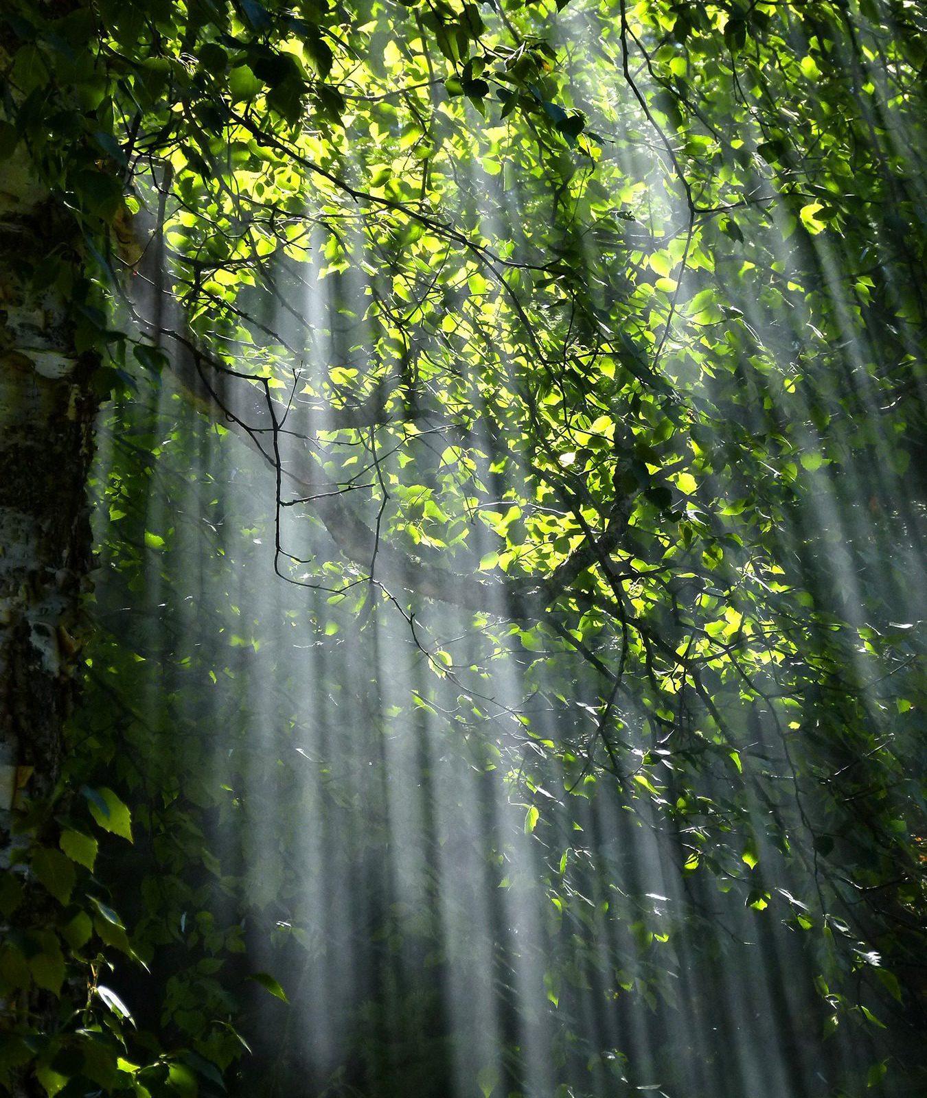 Treetop Path