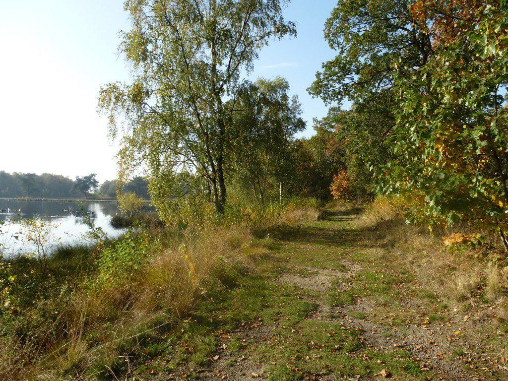 Fotoalbum Natur im Park