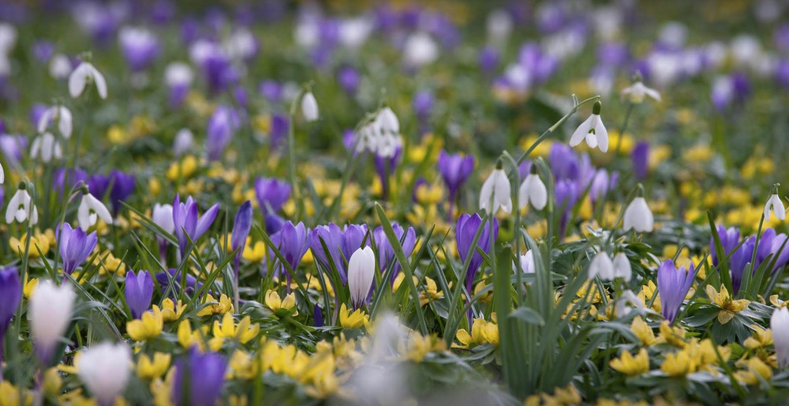 Voorjaarsvakantie Gelderland