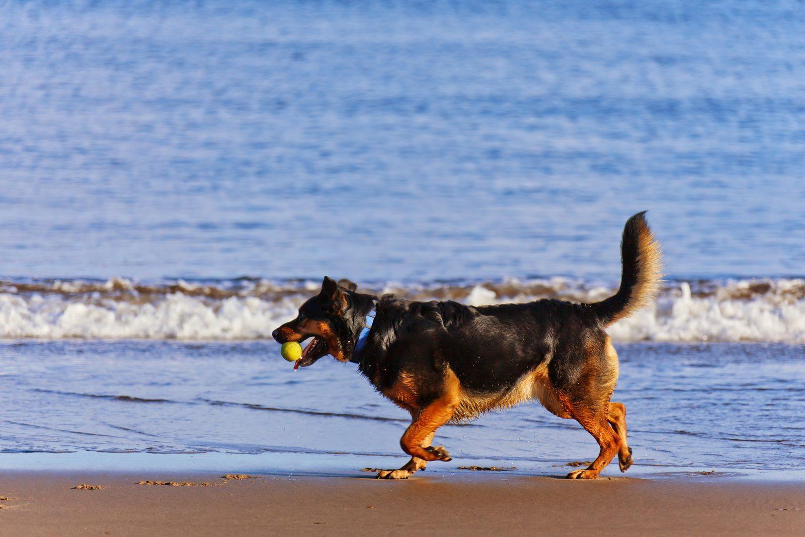 Urlaub mit Irhem Hund