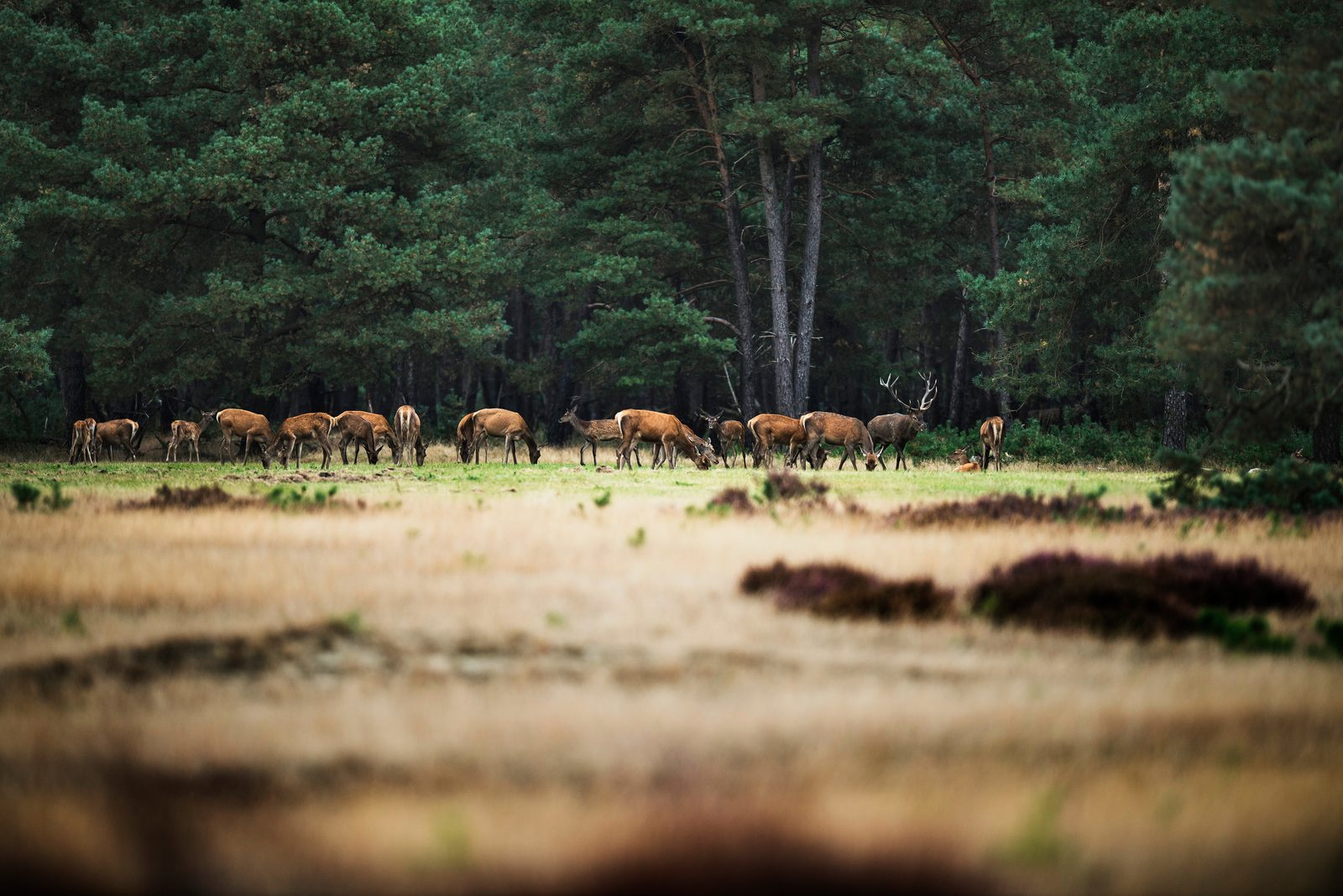 Die Big Five in der Veluwe | TopParken