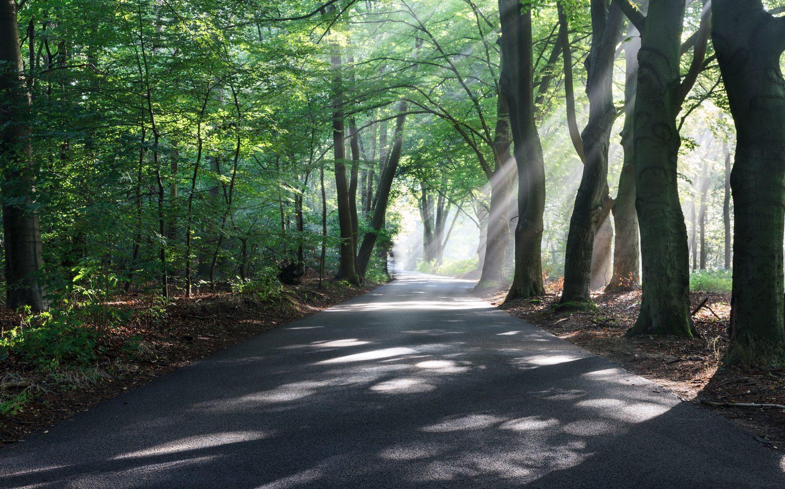 Wälder Bospark Ede