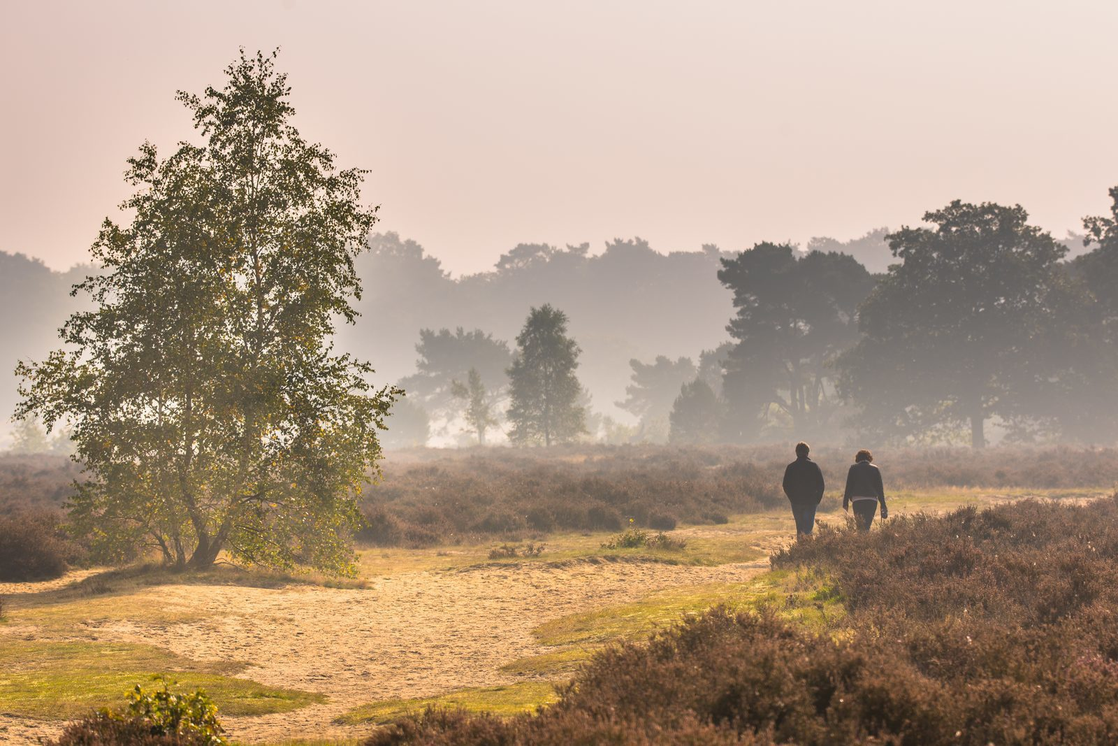 Holiday on the Veluwe