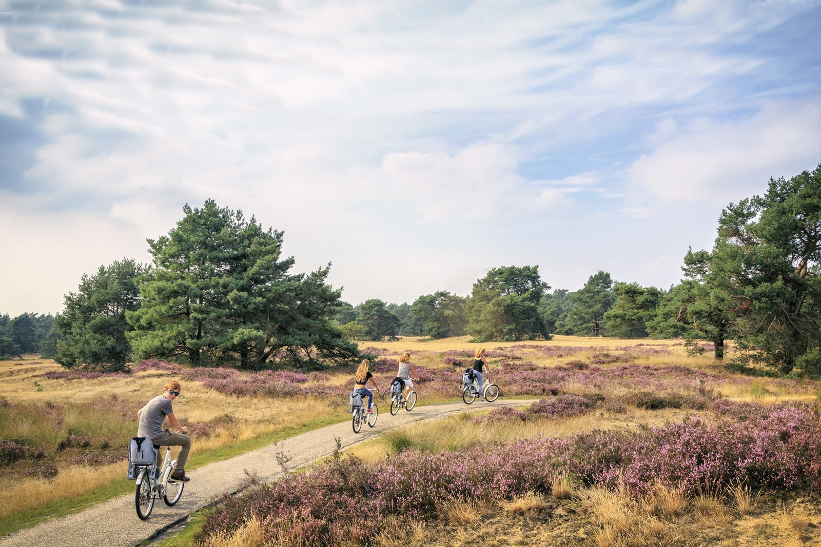Biking at de Veluwe
