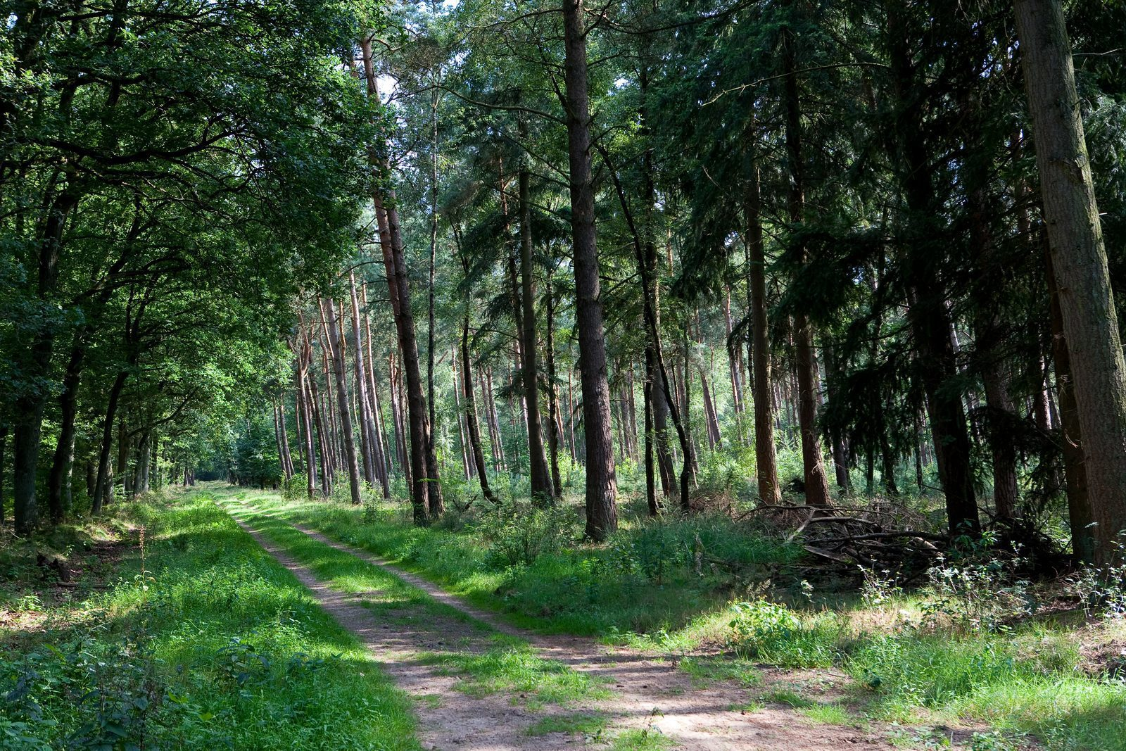 Forêt autour de Lunteren