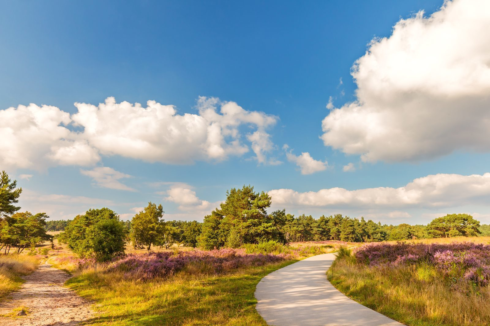 Veluwe - heath